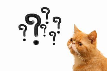 リフォームに関するよくある質問を紹介!疑問を解決
